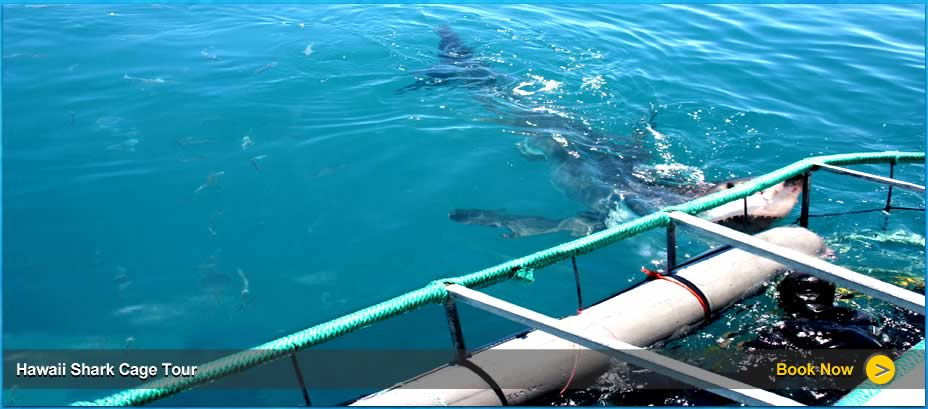 Shark Cage Tours In Hawaii